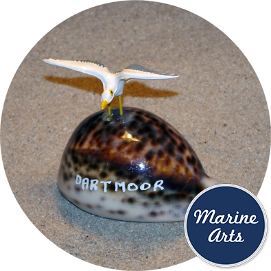- Cowrie Seagull