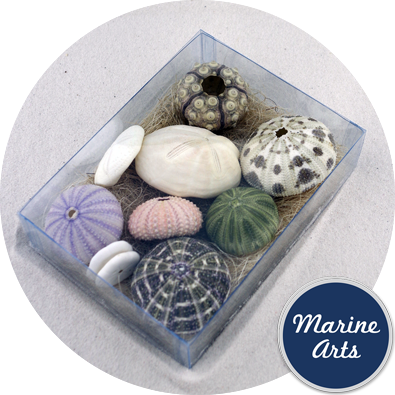 8072 - Assorted Urchin Pack