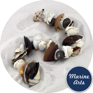 8073 - Drilled - Assorted Brown & White Shells