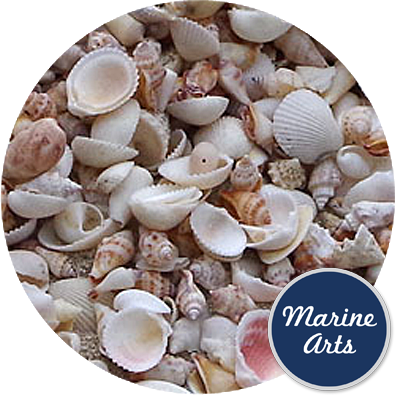 8099 - Assorted Sea Bleached Shells (10-40mm - Mix 10)