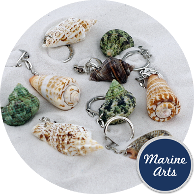 8137 - Shell Keyrings - Assorted