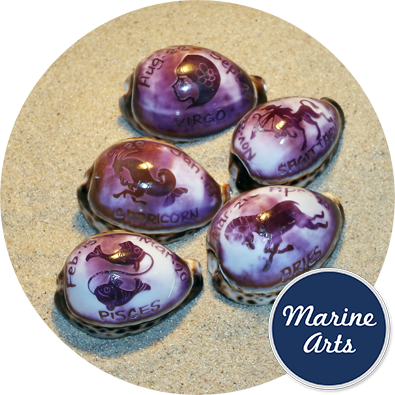 8143 - Hand Crafted Cowry Zodiac Shell