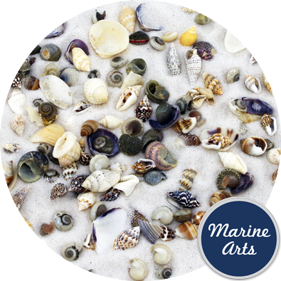 8166 - Assorted Micro Shells (3-10mm - Mix 9)
