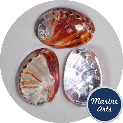 8205 - Polished Abalone - Red - 6-7.5cm