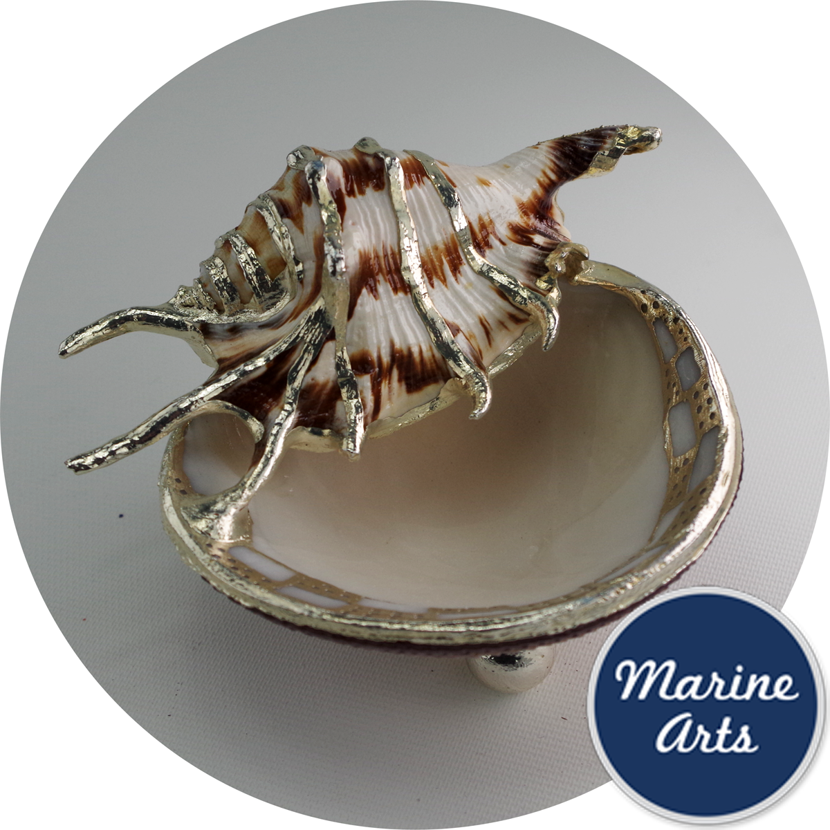 - Silver edge clam shell dish with shell accent
