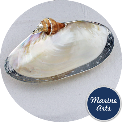 8270-P20 - Silver Edge Dish with Shell Accent - Cabebe Clam 22.5-25cm