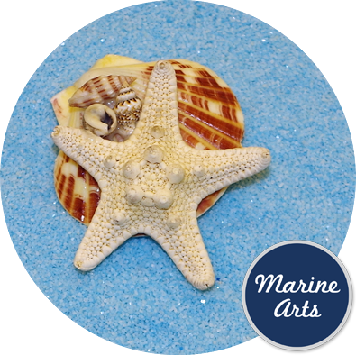 8440 - Fridge Magnet -Starfish