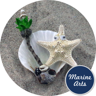 - Starfish and Shell - Magnet