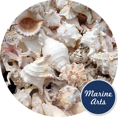 8454 - Mix11 Sea Washed Feature Shells
