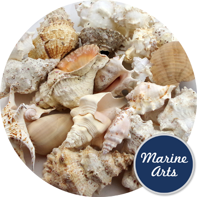 8454 - Assorted Sea Washed Feature Shells (Mix 11)