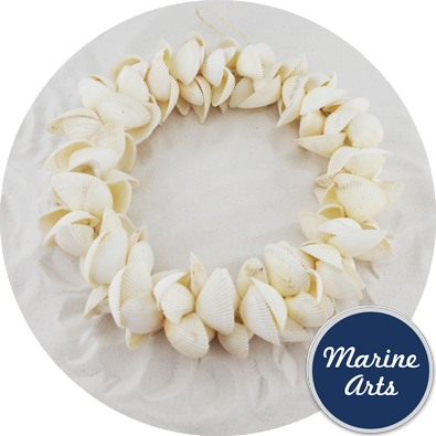 8506 - White Cockle - Shell  Wreath