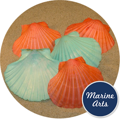 Coloured Scallop Deeps