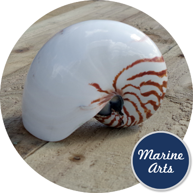 - Polished Natural Nautilus - Giant - 12.5-15cm