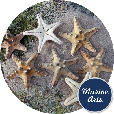 - Starfish Knobbly Small 5-7.5cm