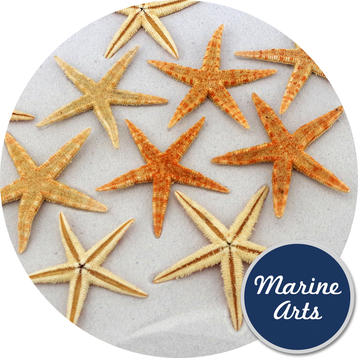 - Starfish Natural Small 6-8cm