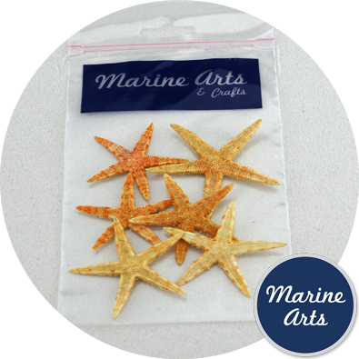 8743-P9 - Hobby & Craft Pack - Starfish - Small