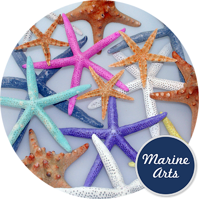 - Starfish Assorted Colours 7.5-20cm