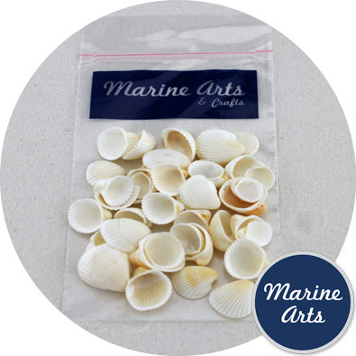 8844-P9 - Hobby & Craft Pack - Small White Cockle Shells