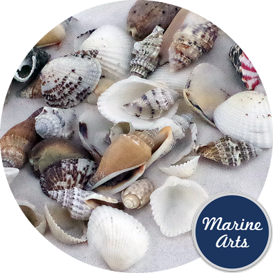 8847 - Assorted Small Shells (15-30mm - Mix 2)
