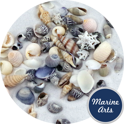 8853 - Assorted Craft Shells (5-20mm Mix 1)