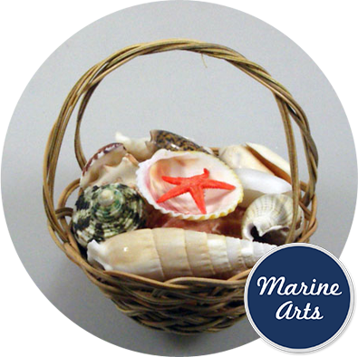 "8859 - Basket Assorted Shells with Handle 7.5cm (3"" )"
