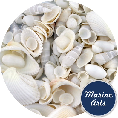 8860 - White Wedding Shells (10-40mm - Mix 3)