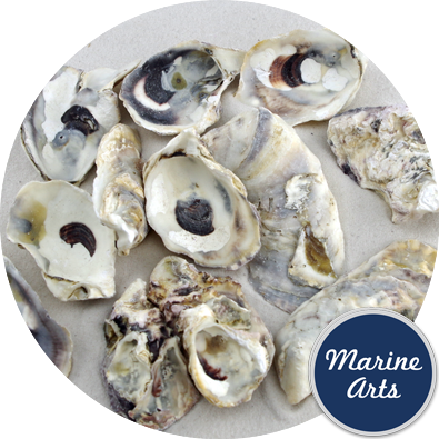8946C - Sea Washed - Oyster Shells