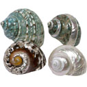 Mother of Pearl & Polished Shells