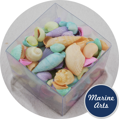 Beach Cube - Pastel Assorted Shells