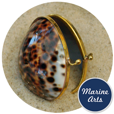 8316 - Polished Shell Purse - Cowrie