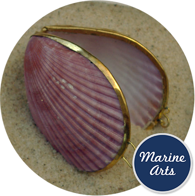 8317 - Polished Shell Purse - Coloured Scallop