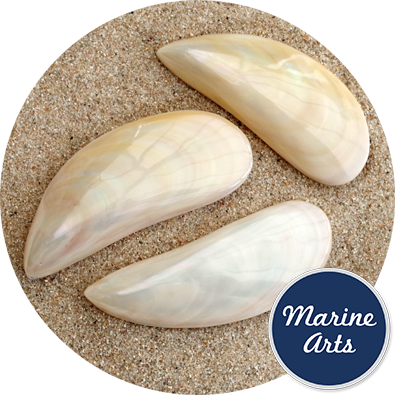 - Polished Tahong Mussel Pair 7.5-10cm